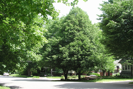 Save $100 on Shade Trees with Cedar Falls TREES